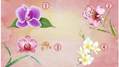 Photo of Lulja e orkidesë që zgjidhni do të zbulojë se çfarë ju bën speciale