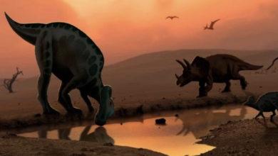 Photo of A po zhdukeshin dinozaurët, që para përplasjes së asteroidit me Tokën?