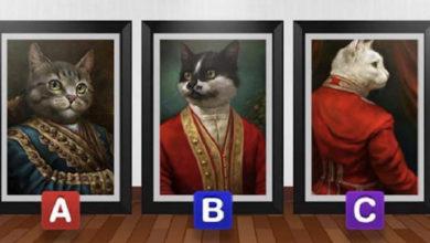 Photo of Bëje testin: zgjidh një mace dhe zbulo diçka interesante për veten tënde