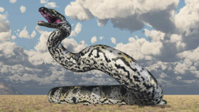 Photo of Titanoboa: Gjarpri më i madh në botë, që sundoi Kolumbinë prehistorike